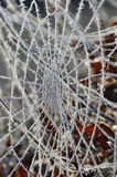 Spider web with frost Stock Photo