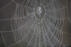 Spider web with frost Royalty Free Stock Photo