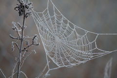 Spider web with frost. Empty Spider web with frost early in the morning Stock Image