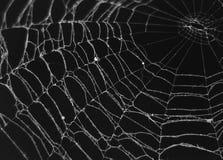 Spider Web. Frozen spider web against black background Royalty Free Stock Photo