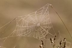 Spider web full of dew drops Royalty Free Stock Photo