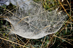 Spider web full of dew Royalty Free Stock Photo