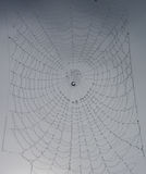Spider web full of rain drops. A perfect Spider web full of  drops after the rain Royalty Free Stock Photography