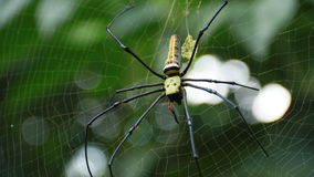 Spider. On  web in garden Royalty Free Stock Photography
