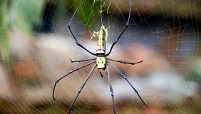 Spider. On  web in garden Stock Photo