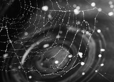 Spider web in garden Royalty Free Stock Photography