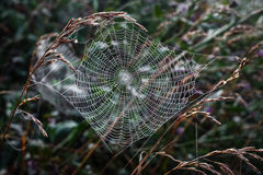 Spider web. Spider web on grass backgroung Stock Image
