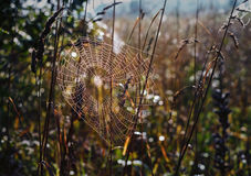 Spider web. Spider web on grass backgroung Royalty Free Stock Photo
