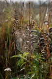 Spider web. Spider web on grass backgroung Stock Photo