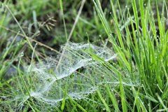 Spider web in the grass Royalty Free Stock Photography