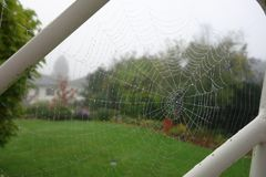 Spider Web, Grass, Tree, Landscape Stock Images