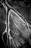 Spider Web Grayscale Photo Stock Images