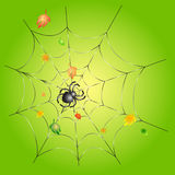 Spider on a Web on a Green Background. Green background with leafs and a spider on a web Stock Photos