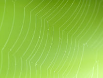 Spider web with green background Stock Image