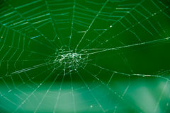 Spider web on a green background. Tangled spider web on a green background Stock Photos