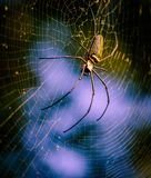 Spider on web. Spider on a spider web with a green and blue background Stock Photo