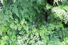 Spider on web with green leaf in background 1. Spider on web with green leaf in background Stock Photography