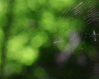 Spider web. On a green nature background Stock Image