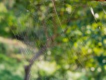Spider web in green nature. Background Stock Images
