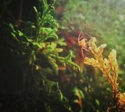 Spider web. On a green plant hit by sun ray Royalty Free Stock Images