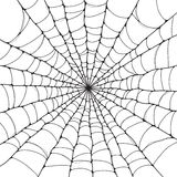Spider web. Halloween background. Isolated spider web Royalty Free Stock Photography