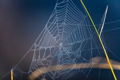 Spider web hanging on dry grass in dark background royalty free stock photo