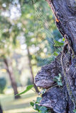 Spider Web. Hanging on a tree with green leafs in a sunny afternoon in the park Royalty Free Stock Image