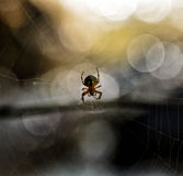 Spider in a Web. Spider hangs in a web over a river in the Wasatch national forest in Utah USA Stock Image