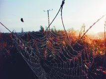 Spider web on the hungarian border Royalty Free Stock Images
