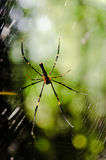 Spider web of the hunt Royalty Free Stock Photography