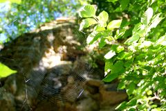 Spider Web. Illustrated spider web built between two tree branches Royalty Free Stock Photo