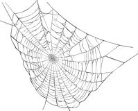 Spider web illustration. Illustration with spider web isolated on white background Royalty Free Stock Photography