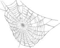 Spider web illustration Royalty Free Stock Photography