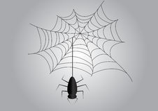 Spider web. Illustration of a spider web and spider Stock Photos