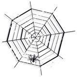 Spider web vector. Illustration of a spider web and spider, isolated on white background + vector eps file Stock Image