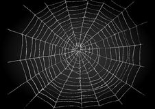 Spider Web Stock Image