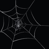 Spider in web Royalty Free Stock Photography