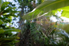 Spider web. Image of spider web and light Royalty Free Stock Photography