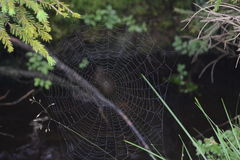 Spider web. An image suitable for using in newspapers, on websites etc Stock Photography
