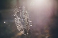 Free Spider Web In The Forest Royalty Free Stock Photos - 110916108
