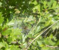Funnel-web spider Stock Photography