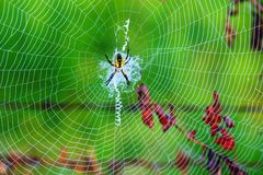 Spider Web. A spider web with an intact black and yellow argiope spider attached to a split rail fence outdoors is highlighted by the morning sun and contrasted Royalty Free Stock Photography