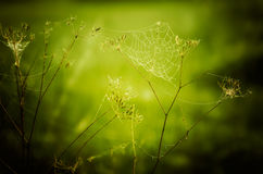 Spider web. Intese green bokeh background Stock Images