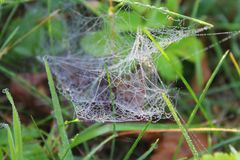 Spider Web, Invertebrate, Arachnid, Spider Royalty Free Stock Images