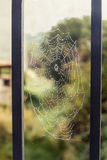 Spider web in an iron fence. Royalty Free Stock Image