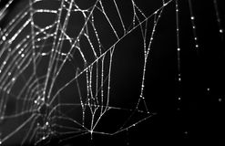 Spider web isolated on black stock photos