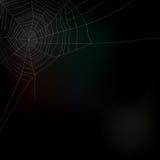 Spider web isolated on dark background,  Stock Photos