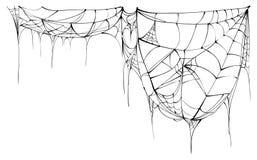 Spider web isolated on white background Royalty Free Stock Image