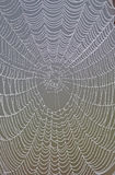 Spider Web. In istanbul Turkey Stock Images
