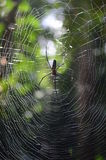 Spider and Web Royalty Free Stock Photography
